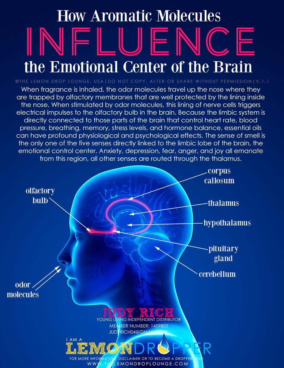 Life Richly Lived Limbic System Emotion